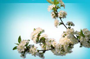 microtech.de startet mit neuer website in den Frühling!